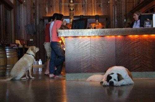 Dog Friendly Getaway: Sonoma Wineries
