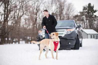 Essential Winter Gear for Dog Travel