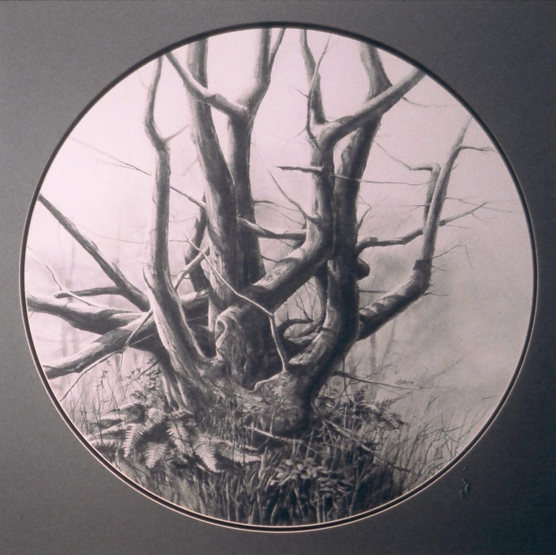 pencil drawing of a barren tree