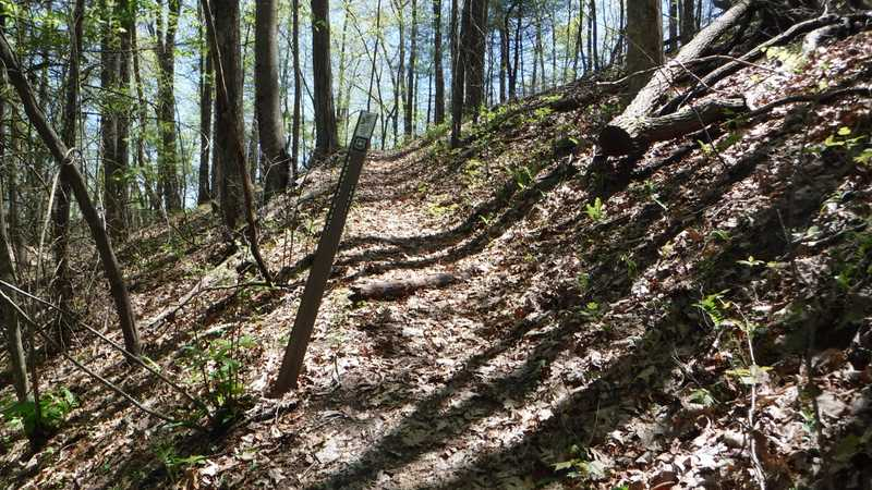 Junction of Roundtop Ridge Trail