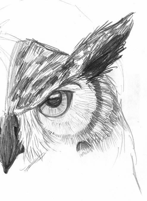 Owl Face Sketch