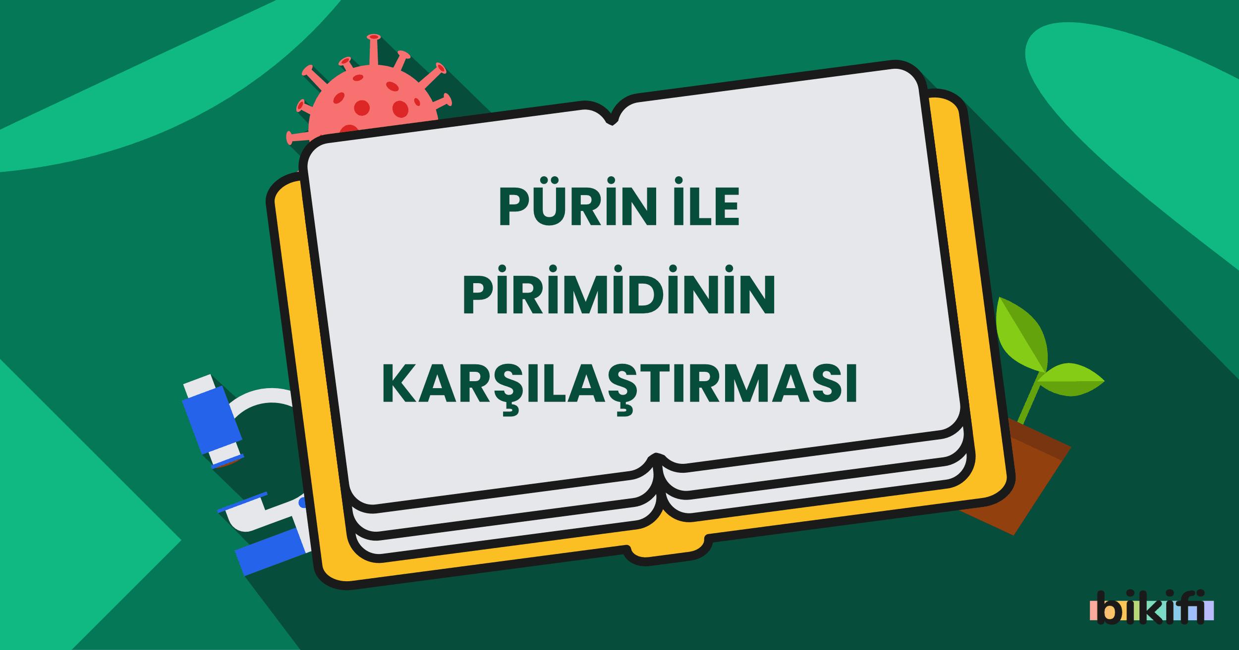 Pürin ile Pirimidin'in Karşılaştırması