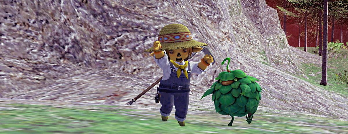 Fall Harvest 2020