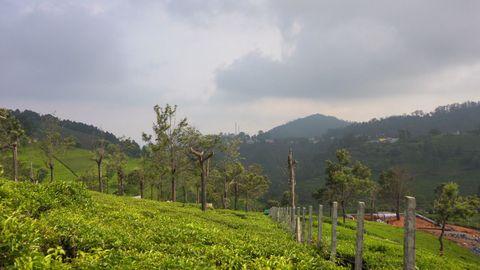 Kodamalai View