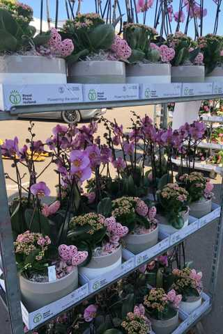 Paarse orchideeen in stenen ronde pot
