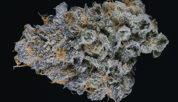 Cherry Pie marijuana strain and ASMR