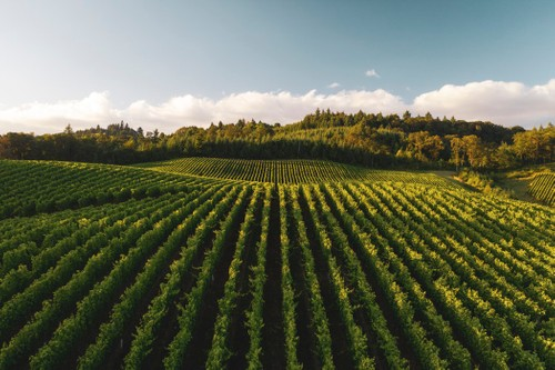 Global Wine Travel Index Gains Over 120+ Pieces of Coverage