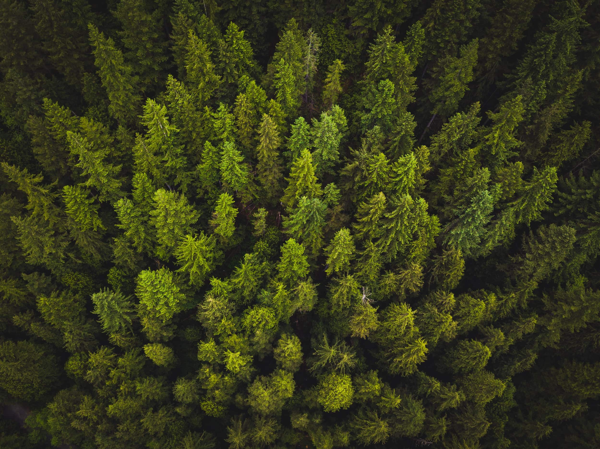 A green forest from an aerial view.
