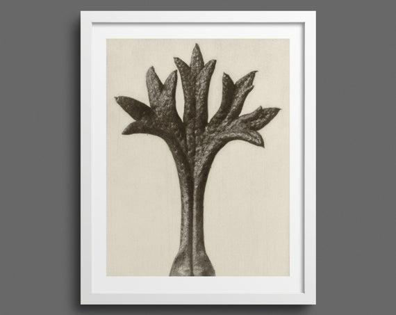 Saxifrage Leaf - Plate 35