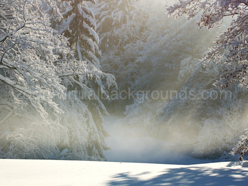 Novelty Virtual Background for Zoom in snowy forest with icy mist in the air