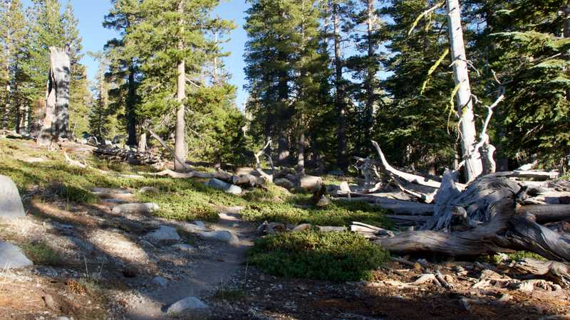 Near a campsite in Desolation Wilderness