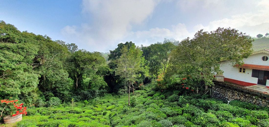 The tea estate and neighboring