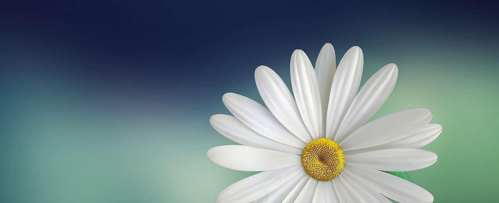10 Sfaturi cum să păstrezi florile proaspete