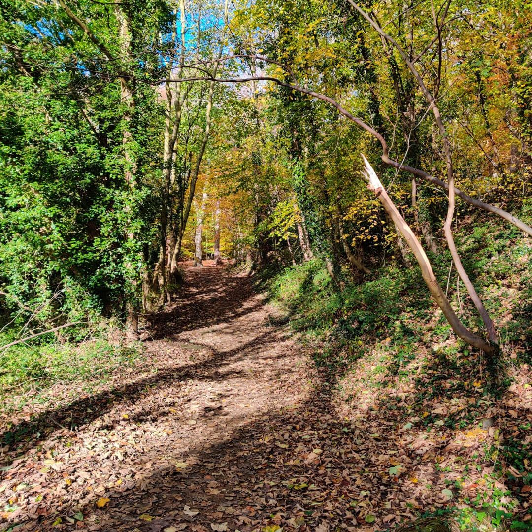 Gledhow Valley Woods path up the hill