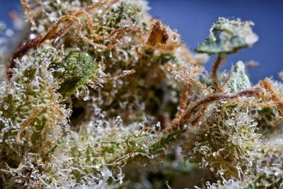 What will a Schedule 2 classification mean to the marijuana industry?