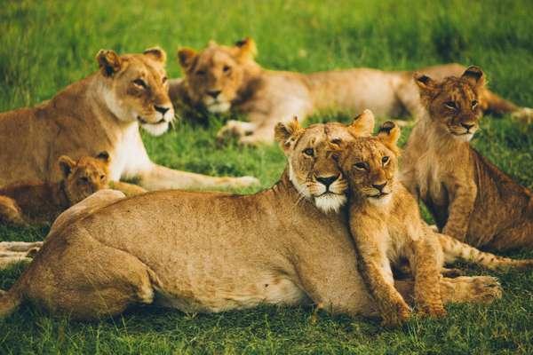Wildlife - Leonard Von