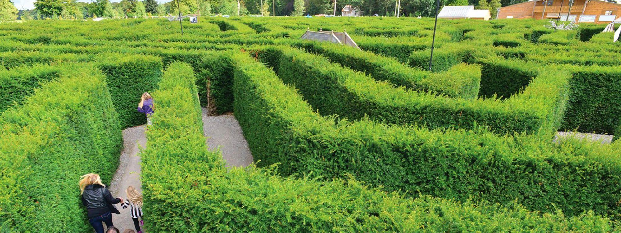 Stockeld Park Maze