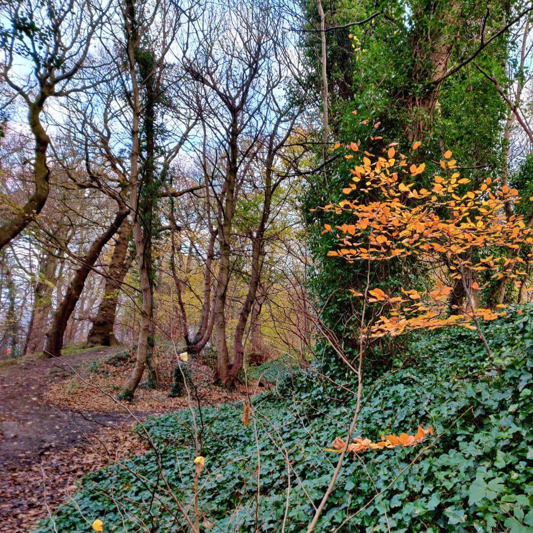 Muddy path through Batcliffe Wood