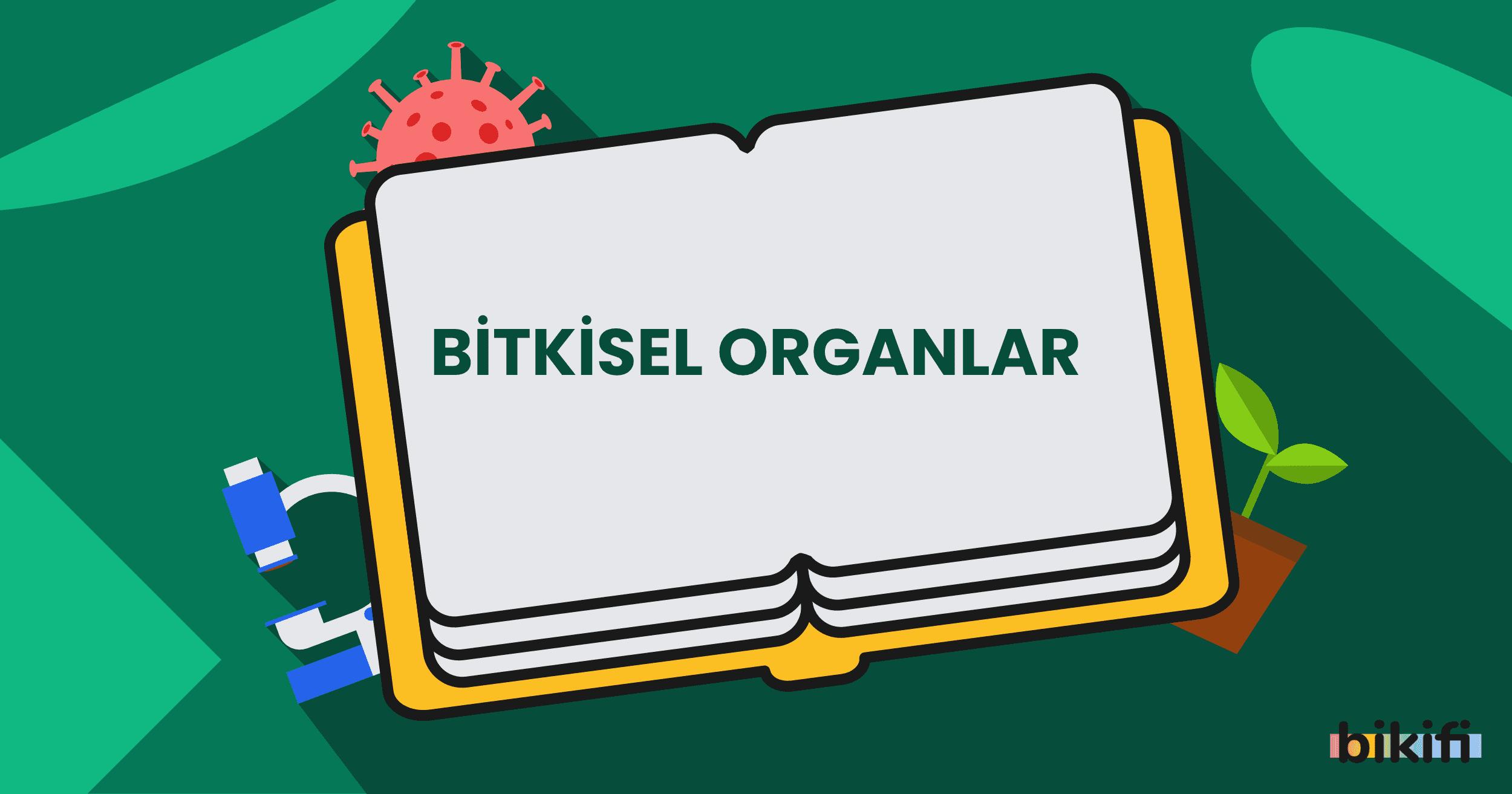Bitkisel Organlar