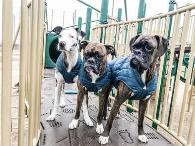 Trail Tested: 5 Dogs Who Love the Kurgo Loft Jacket