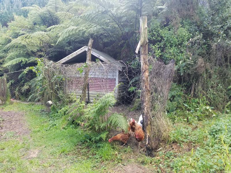 Chook coop up in the bush