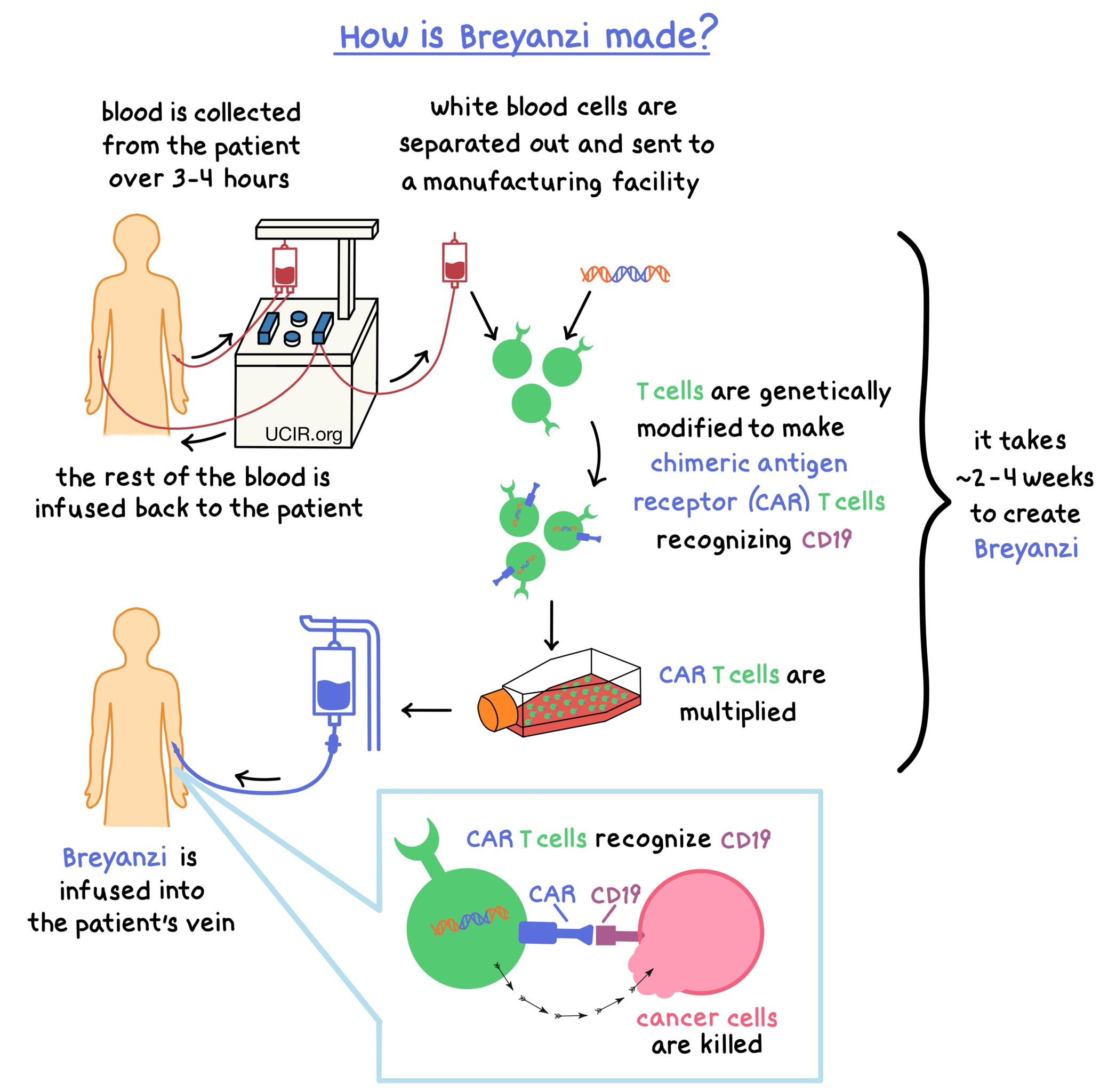 Illustration showing how Breyanzi is made