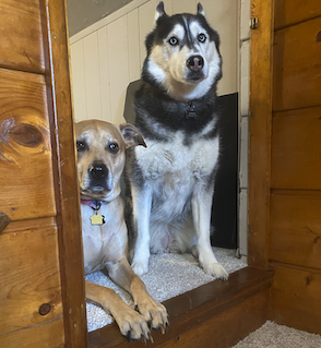 Two very cute dogs hanging out in their new home.