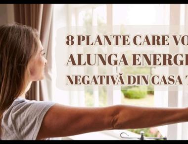 7 plante care vor alunga energia negativă din casa ta