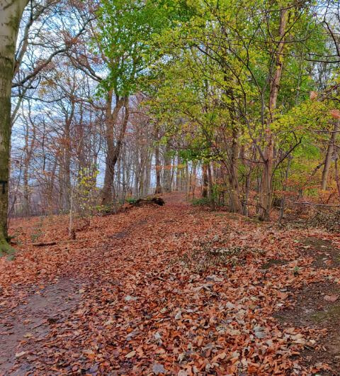 Batcliffe Woods in Autumn