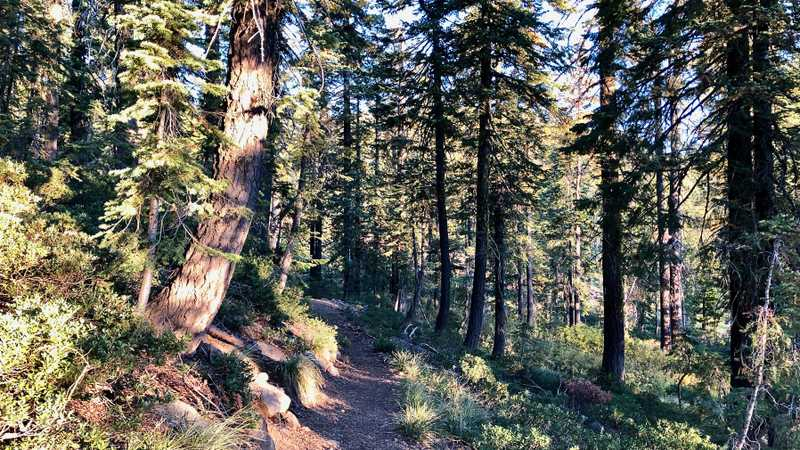 The PCT goes through a forest