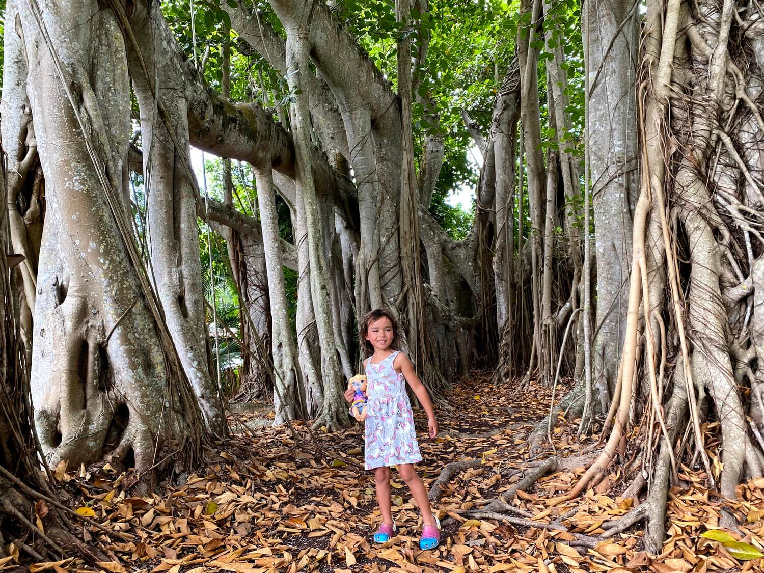Elyse in a banyan tree forest