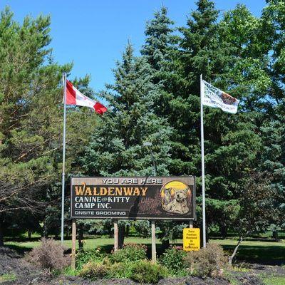 dog-kennel-waldenway-camp
