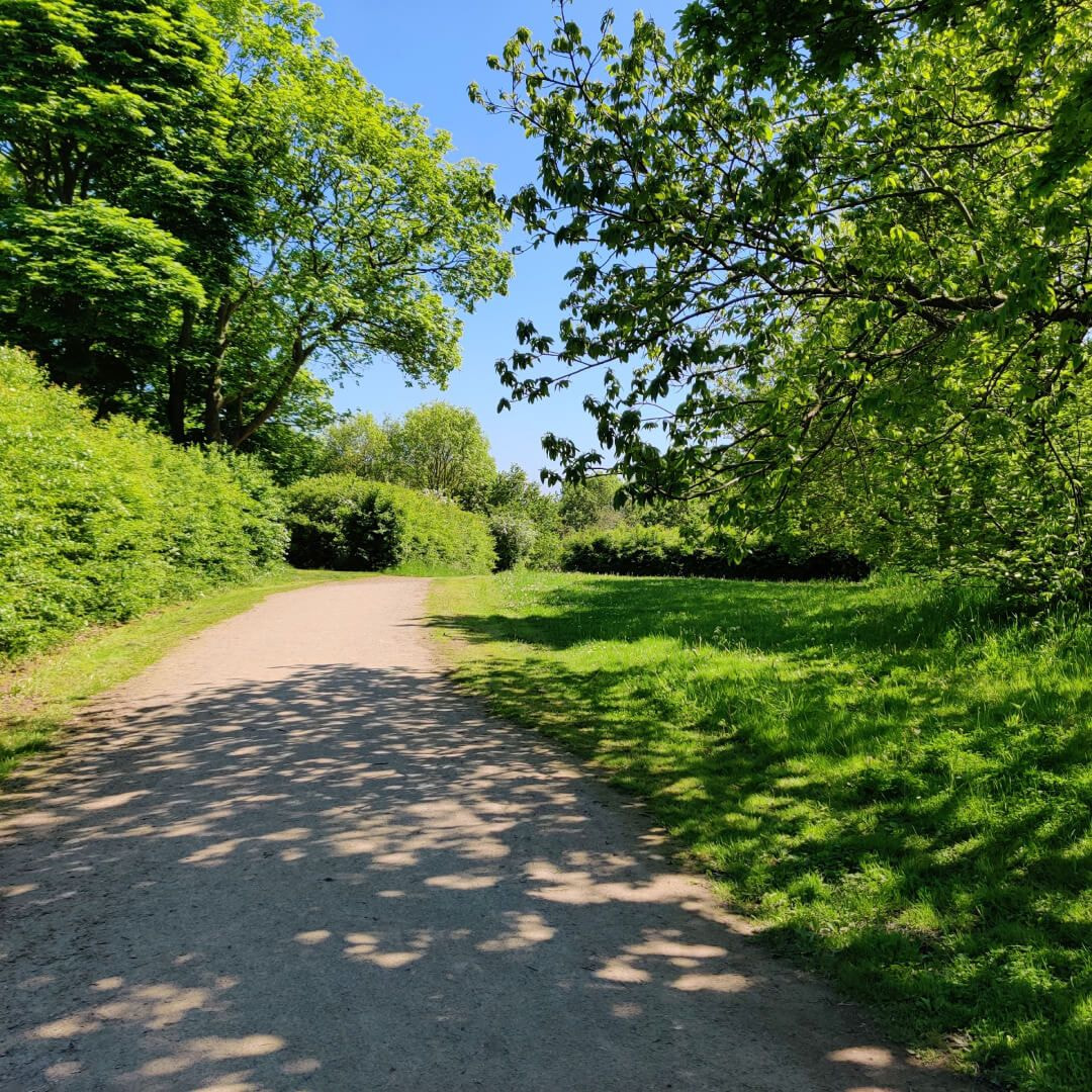 Temple Newsam path with trees in sun