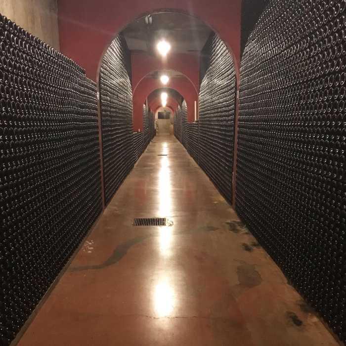 Wine bottles in cellar