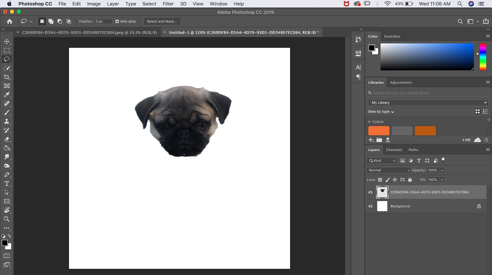 Picture of your dogs floating head