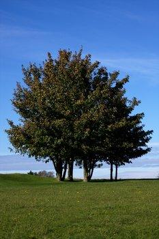 Tree 1578