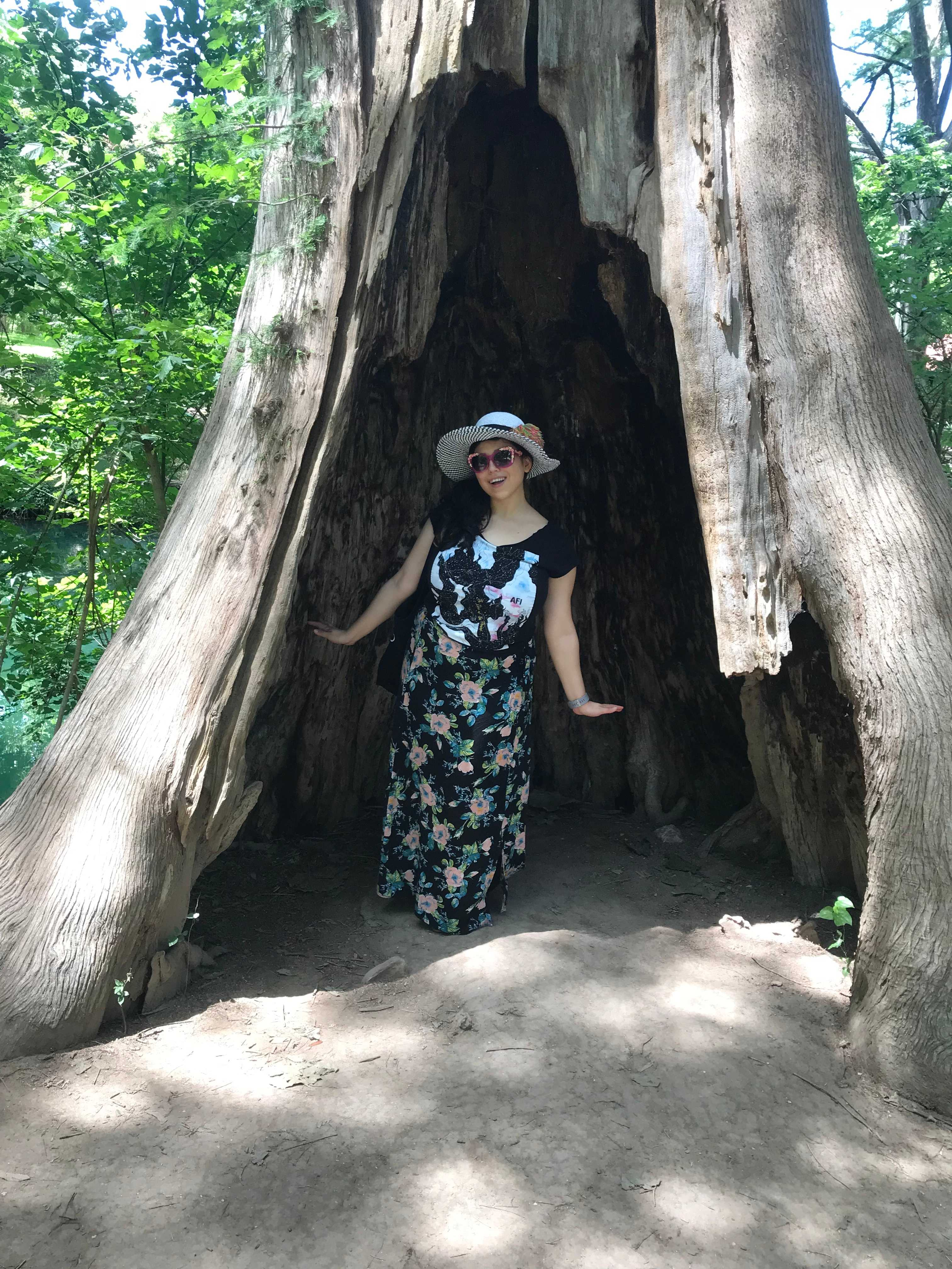 Road trip fun with a tree in Wimberley, Texas