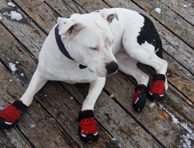 Why Do Dogs Walk Funny in Shoes?