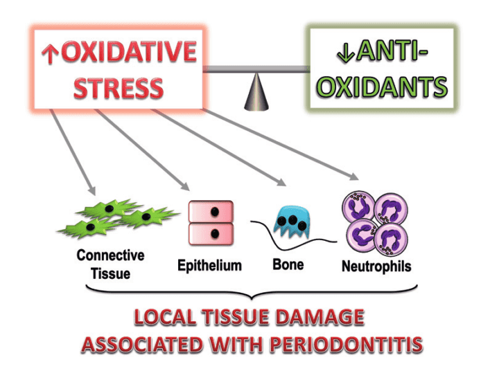 Oxidative stress causes inflammation
