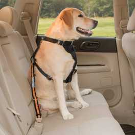 Why Does My Dog Bark in the Car?