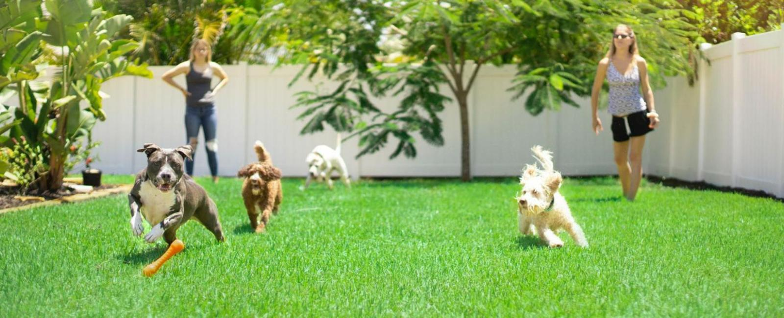 Dog Boarding: All You Need to Know