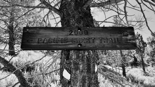 A PCT sign nailed to a tree