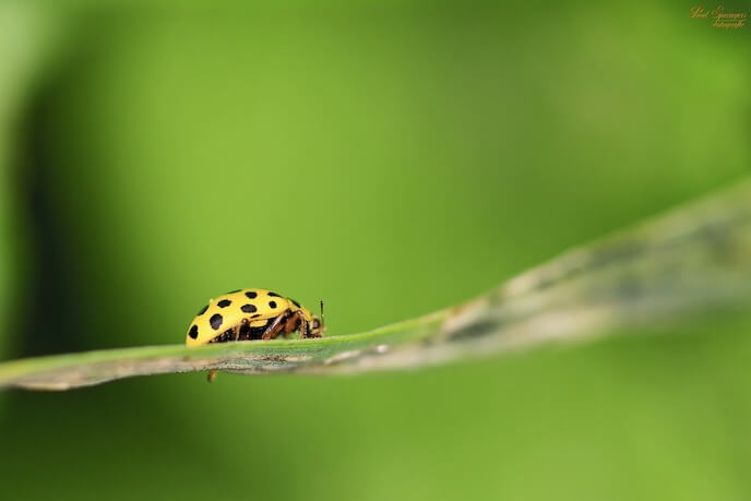 photo of a ladybird