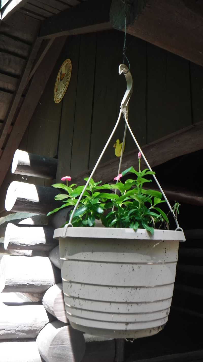 Planter hanging from Quarry Gap Shelter