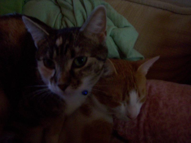 cat31