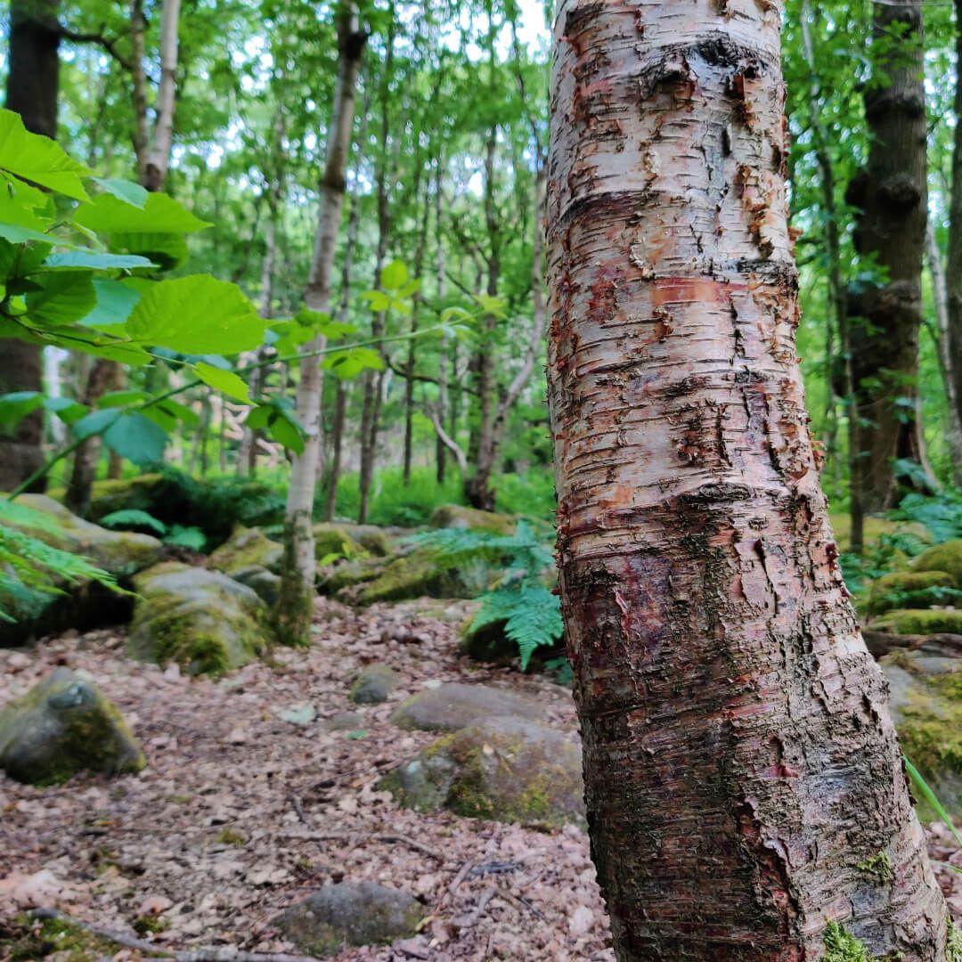 Hawksworth Wood trees