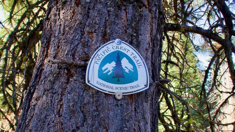 A PCT shield emblem mounted to a tree