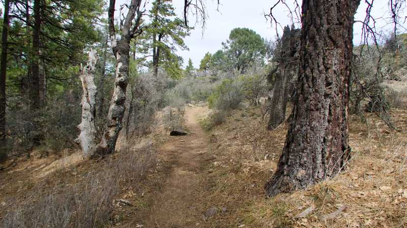 The trail gets flatter