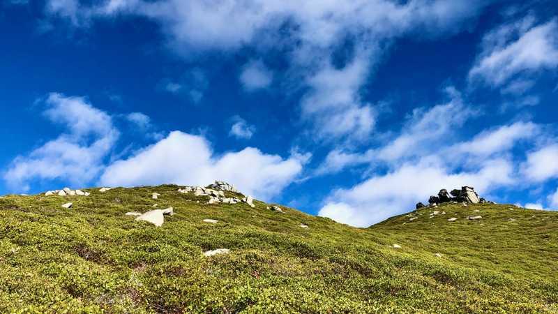 Clouds and manzanita