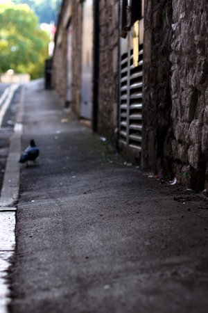 Pigeon 0398